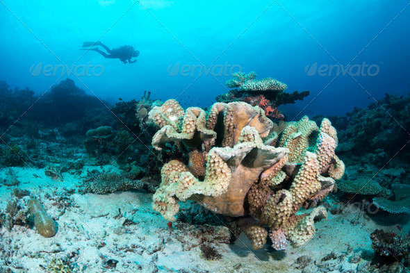 Cup coral reef - Stock Photo - Images