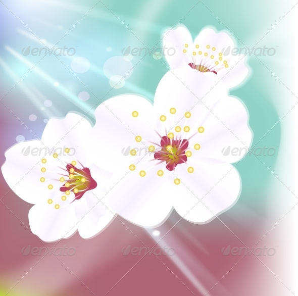Flower Background - Organic Objects Objects