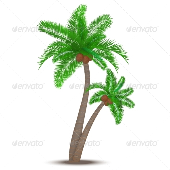 Tropical Palm Tree with Coconuts - Flowers & Plants Nature