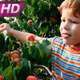 Delicious Apricots - VideoHive Item for Sale