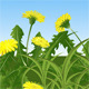 Dandelions - GraphicRiver Item for Sale