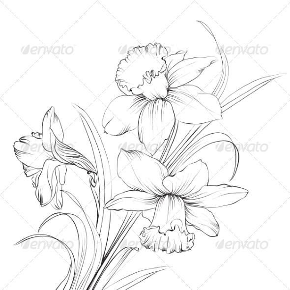 Daffodil Flower - Flowers & Plants Nature