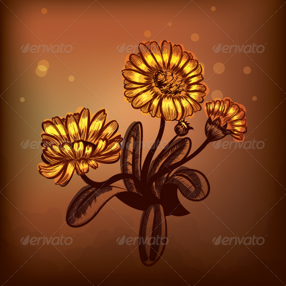 Marigold - Flowers & Plants Nature