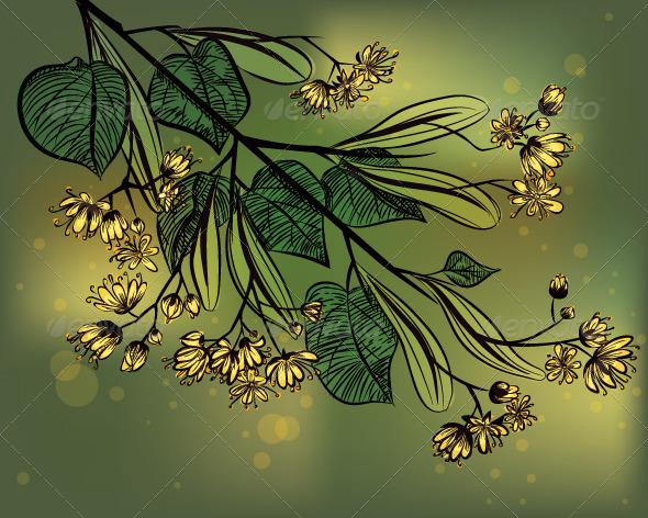 Linden - Flowers & Plants Nature