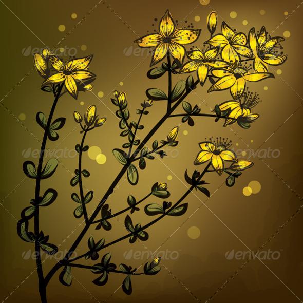 St John's Wort - Flowers & Plants Nature