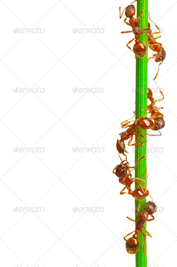 Ants - Stock Photo - Images