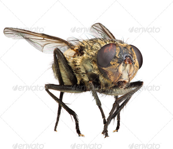 Fly close up - Stock Photo - Images