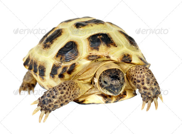 Photo of turtle on a white background - Stock Photo - Images