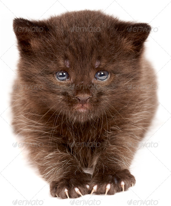 Small kitten on a white background - Stock Photo - Images