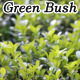 Green Bush - VideoHive Item for Sale