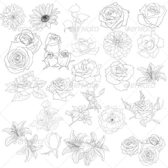 Roses  - Organic Objects Objects