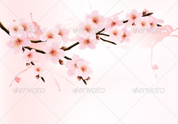 Sakura Branch - Flowers & Plants Nature