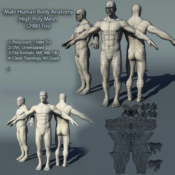 Male Human Body Anatomy High Poly Mesh - 3DOcean Item for Sale