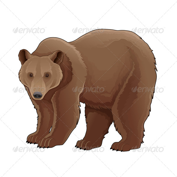 Brown Bear - Animals Characters