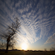 One Tree Hill Sunset - VideoHive Item for Sale