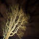 Tree Veins Night to Day - VideoHive Item for Sale