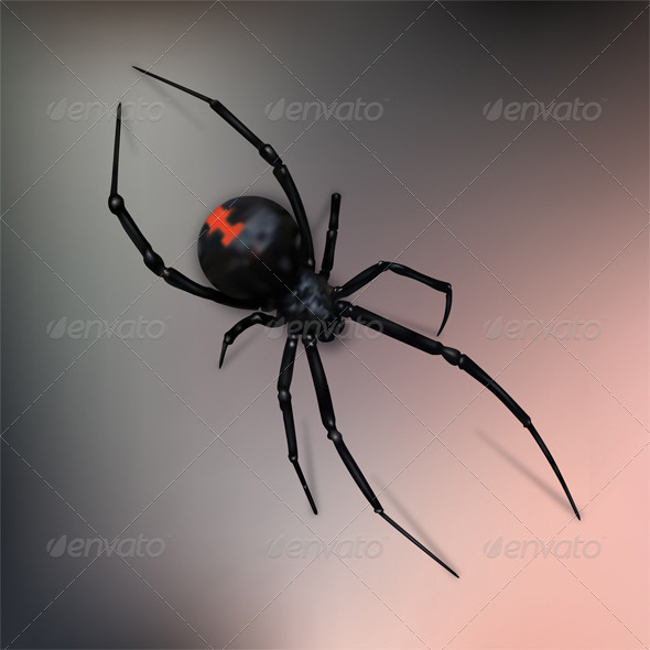 Black Widow Spider - Animals Characters
