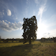 One Tree Sunrise Sunset - VideoHive Item for Sale