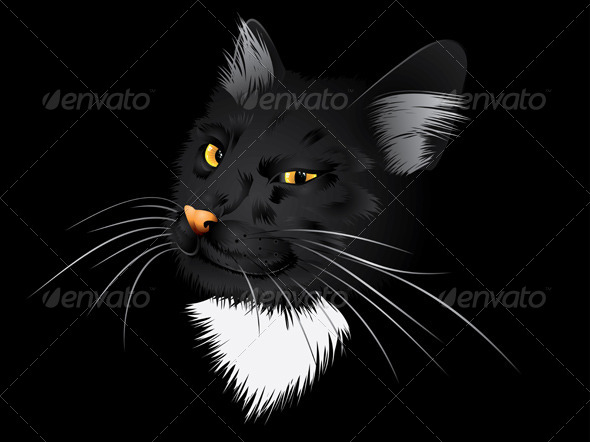 Black Cat in the Dark - Animals Characters