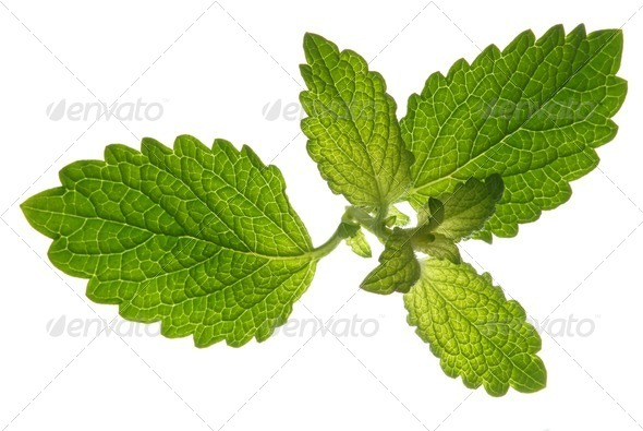 Leaves - Stock Photo - Images