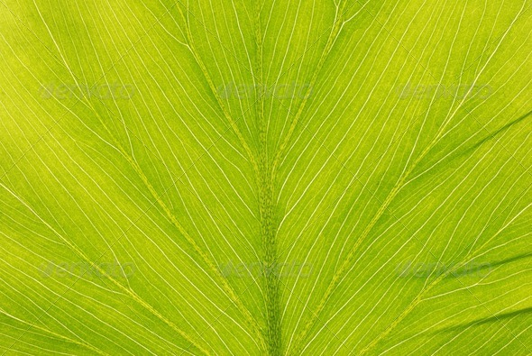 Leaf background - Stock Photo - Images