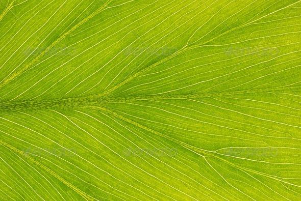 Leaf background - Stock Photo - Images