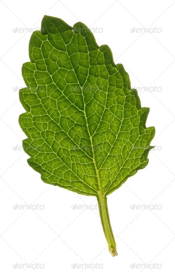 Leaf - Stock Photo - Images