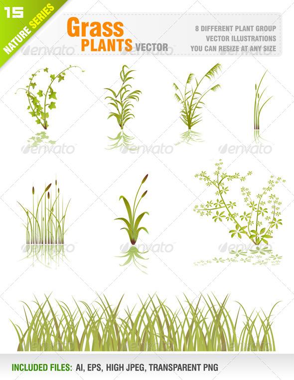 Grass Plant Set - Flowers & Plants Nature