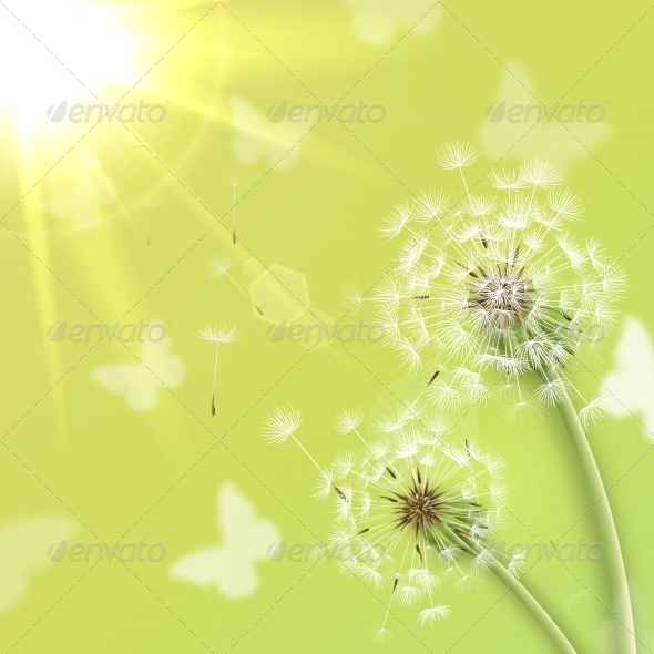 White Dandelions with Summer Sun - Flowers & Plants Nature