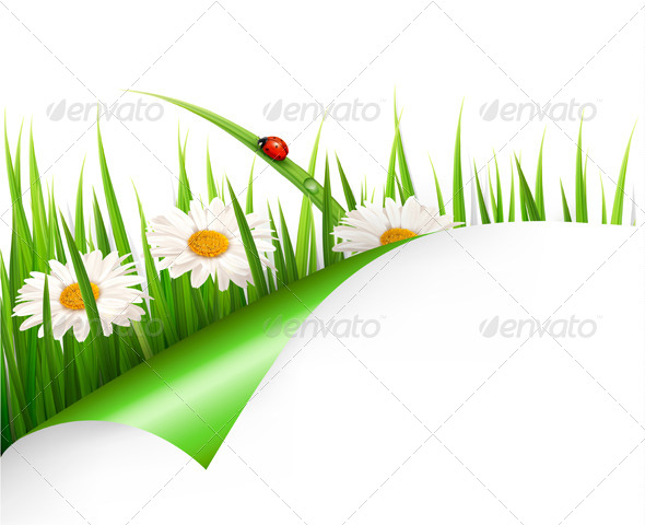 Spring Background with Flowers, Grass and Ladybug - Flowers & Plants Nature