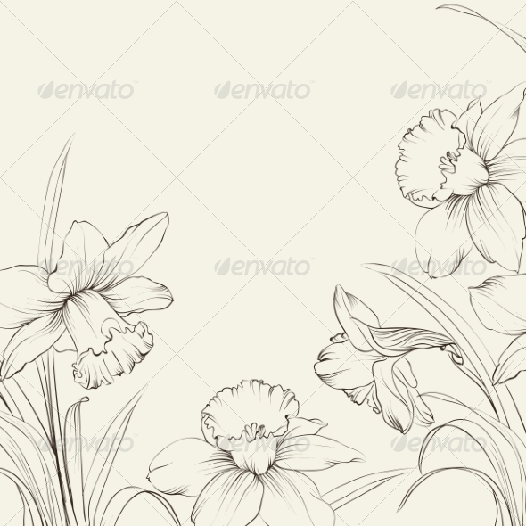 Narcissus Flowers - Flowers & Plants Nature