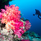 Download Coral reef and diver from PhotoDune