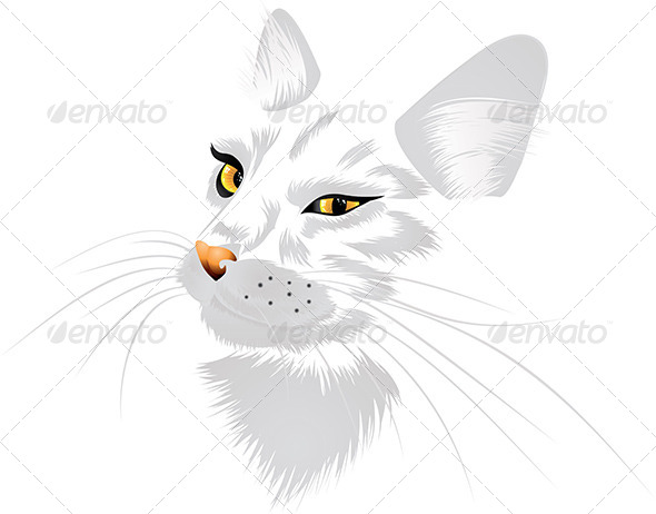 White Cat with Yellow Eyes   - Animals Characters