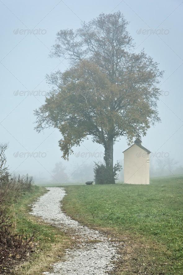 nebel - Stock Photo - Images