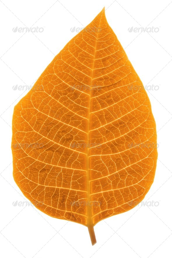 Autumn leaf - Stock Photo - Images