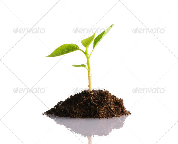 New life - Stock Photo - Images