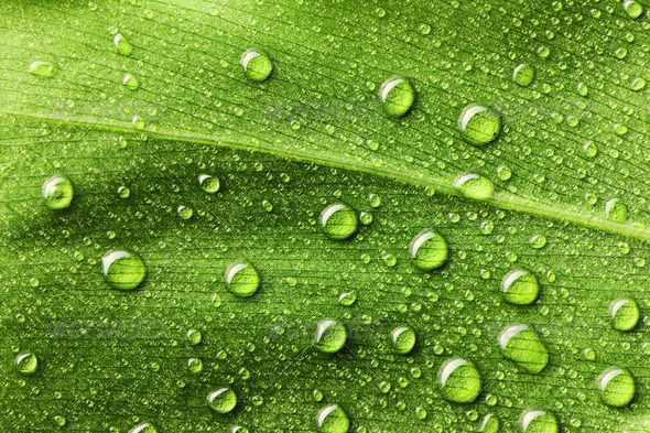 Water drops on leaf - Stock Photo - Images