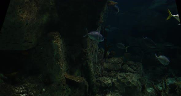 VideoHive Aquarium 2 20402100