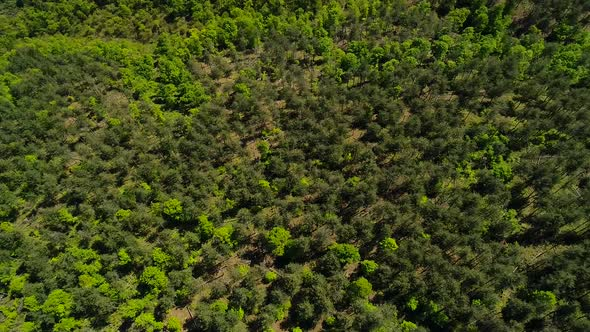 Aerial View Forest by mkstock | VideoHive