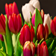 Bouquet of Bright Tulips Blooms 01 - VideoHive Item for Sale