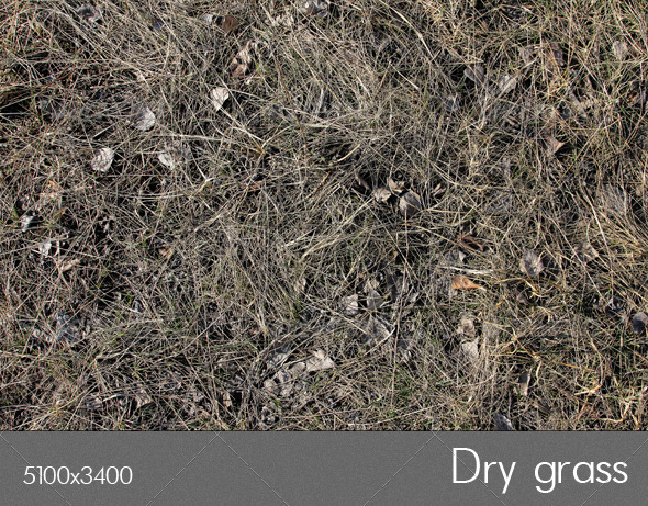 Dry grass - Nature Textures
