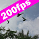 Birds Flying in Slow Motion - VideoHive Item for Sale