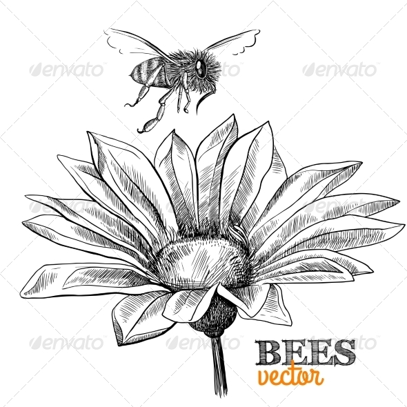 Honey Bee - Animals Characters