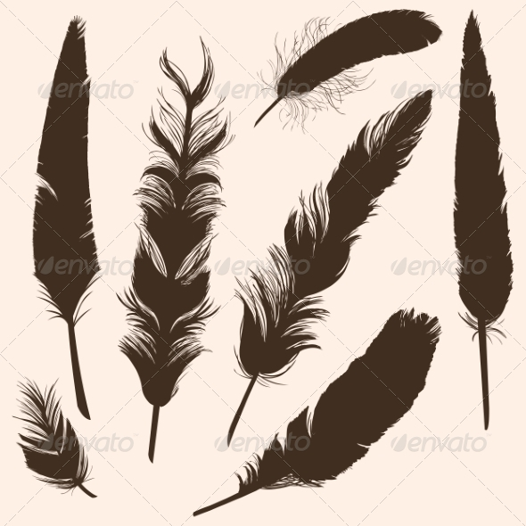Vector Set of Plumage Silhouettes - Miscellaneous Vectors