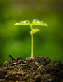 Green sprout growing from seed - PhotoDune Item for Sale