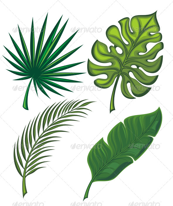 Set of Tropical Leaves - Flowers & Plants Nature