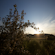 Flower Field Sunrise - VideoHive Item for Sale