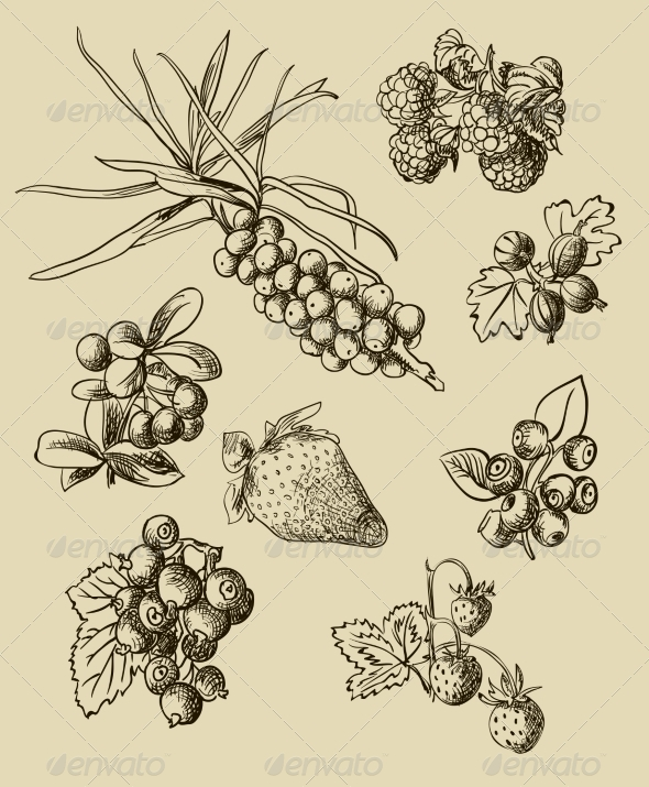 Illustration Set of Berries - Food Objects