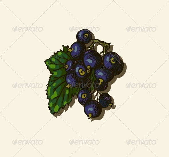 Illustration of Blackcurrant - Food Objects