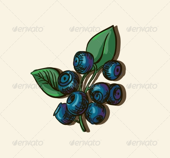 Illustration of Blueberries - Food Objects